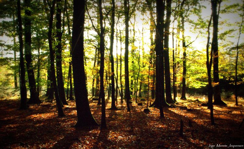 2-efterårsskoven